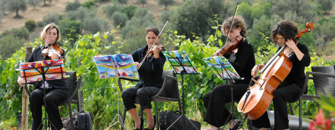 String quartet playing in the wine