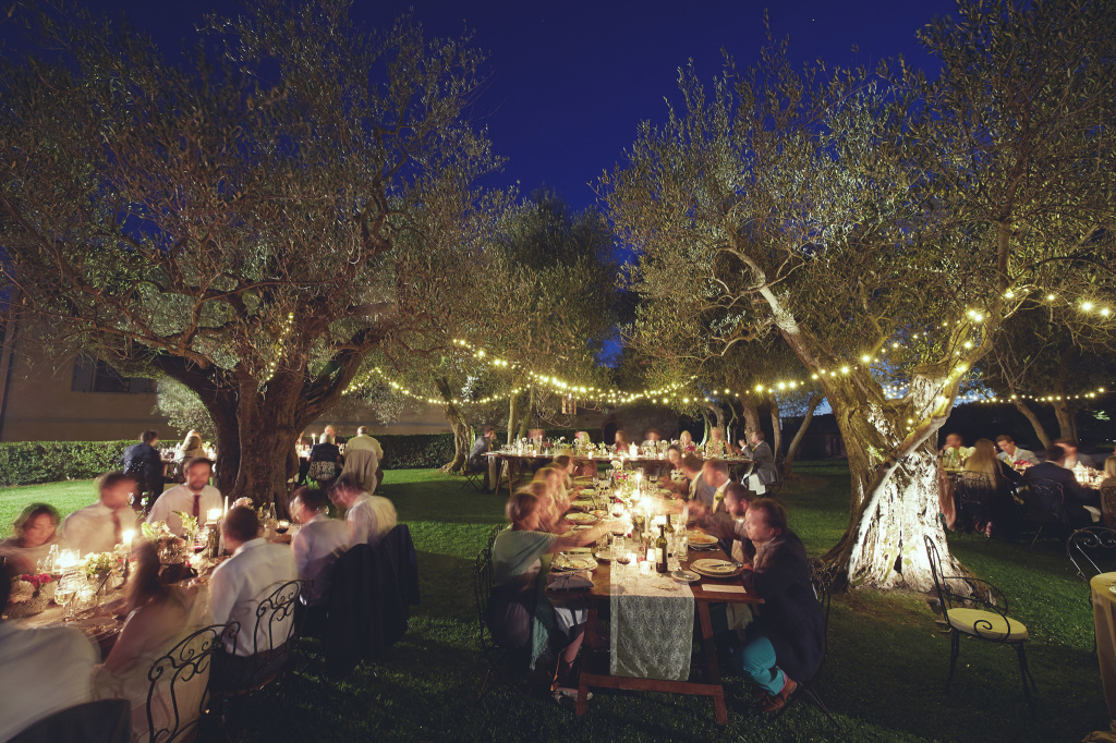 fairy lights  in olive grove