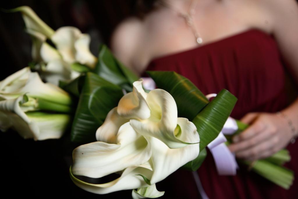 long stem calla lilies