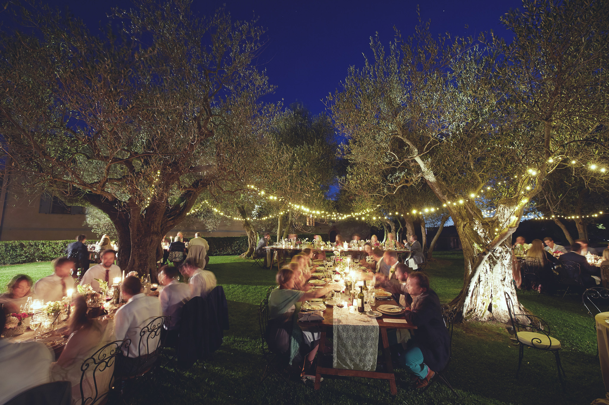 Magical night in a Tuscan olive in grove